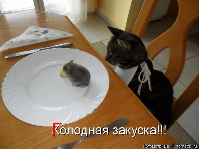 1388865366_kotomatricy-novye-18 (700x524, 195Kb)