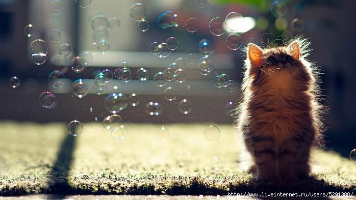 Cat-Desktop-Pictures (700x393, 226Kb)