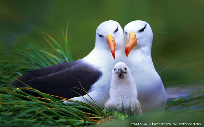 Family-Bird-Pictures (700x437, 208Kb)