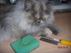 Кошачья шерсть для техники мокрое валяние (2) (240x180, 19Kb)