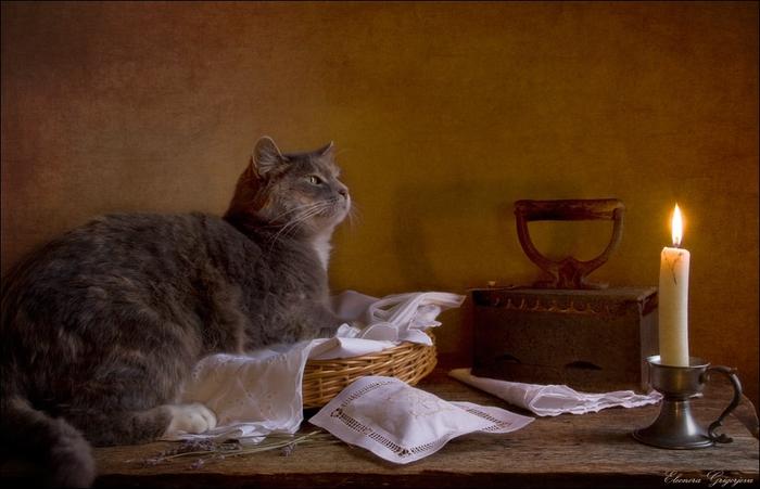 Кошки Eleonora Grigorjeva1 (700x451, 216Kb)