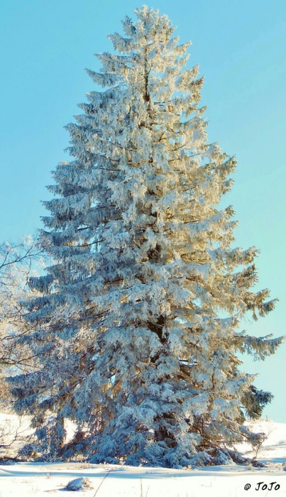 3303834_winter_1 (403x700, 247Kb)