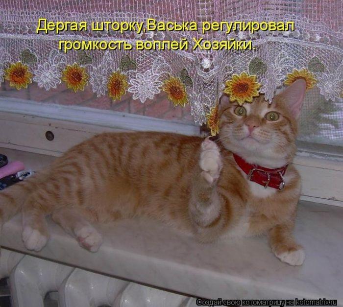 1391352869_03_kotomatrix_03_1 (700x627, 238Kb)