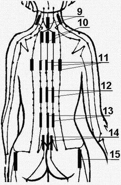 body_back_conductor (250x400, 24Kb)