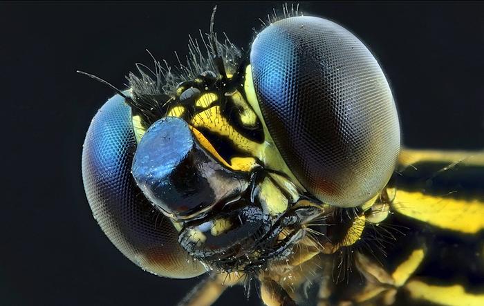 Макро насекомые