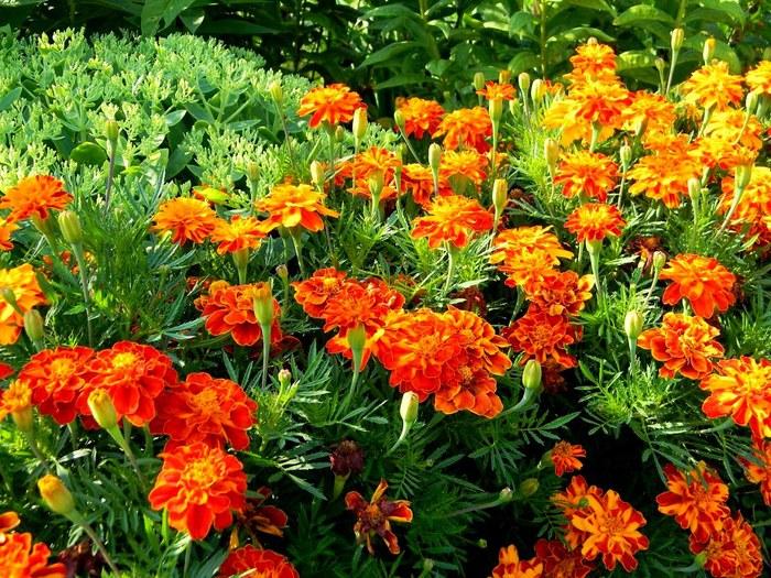 Цветы гиганты своими руками