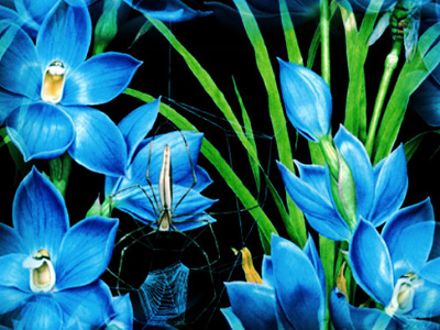 синие-цветы-обр (400x300, 79Kb)