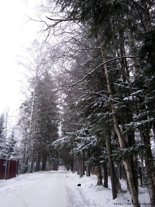 Рощино, зима (2) (525x700, 395Kb)