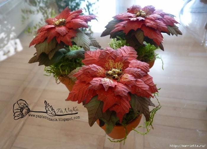 Пуансеттия в горшочке. Цветы из бумаги (1) (700x504, 238Kb)