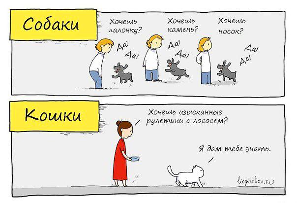 собаки кошки картинки