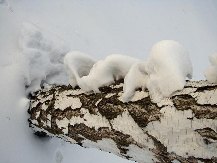 Снежные трутовики/1415502_snejnie_chagi (700x525, 120Kb)
