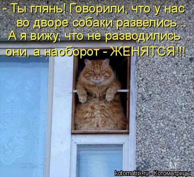 1391956635_cm_20140207_03612_006 (680x618, 276Kb)