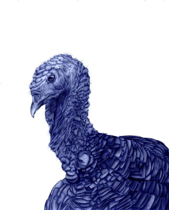 рисунки шариковой ручкой Художница Сара Эстридж 10 (562x700, 140Kb)