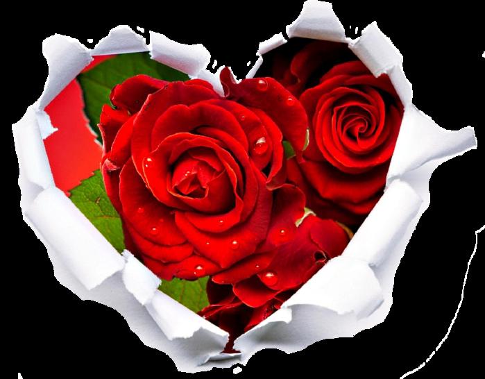 363948_krasnyj_cvety_rozy_serdce_2560x1440_(www.GdeFon.ru) (2) (700x546, 406Kb)