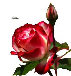 3906024_110081369_4132752thumb (250x267, 91Kb)