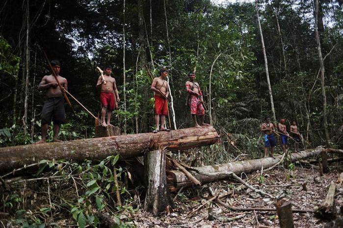 Охота на золотоискателей в джунглях Амазонки