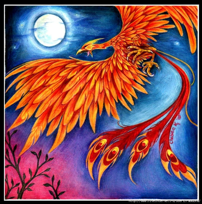 firebird_10 (694x700, 456Kb)