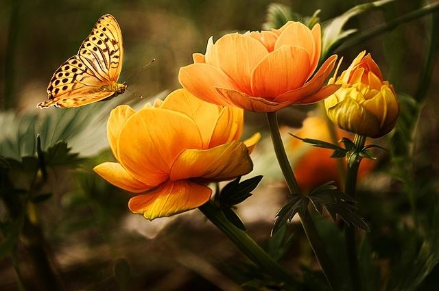 Красивые цветы1 (640x425, 165Kb)