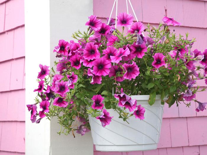4061676_slp_fleurs_45182587 (700x525, 111Kb)