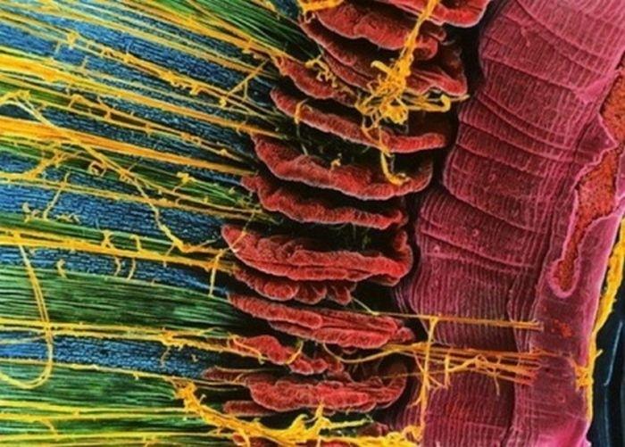 организм человека под микроскопом фото 6 (700x501, 246Kb)
