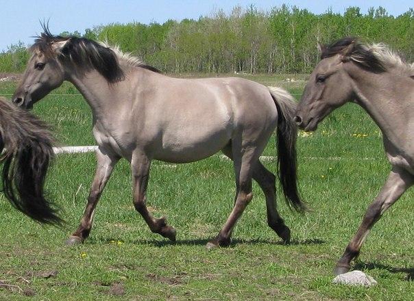 лошадь 5 (604x440, 279Kb)