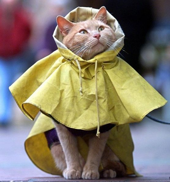 cat (555x596, 234Kb)