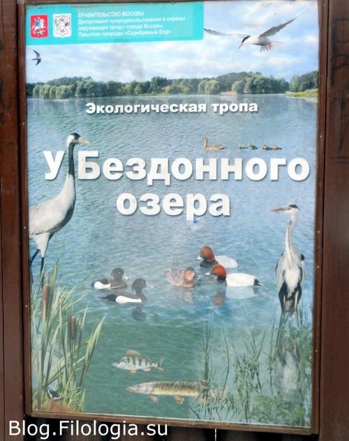 Экологическая тропа в Серебряном бору в Москве/3241858_bor21 (500x633, 181Kb)