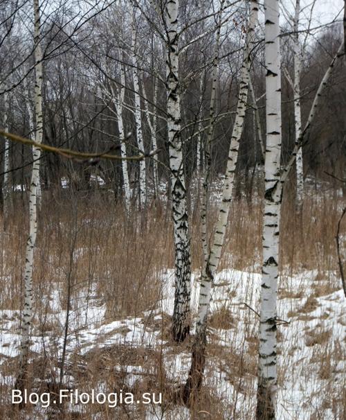 Еще березы зимой/3241858_bor3 (500x606, 242Kb)