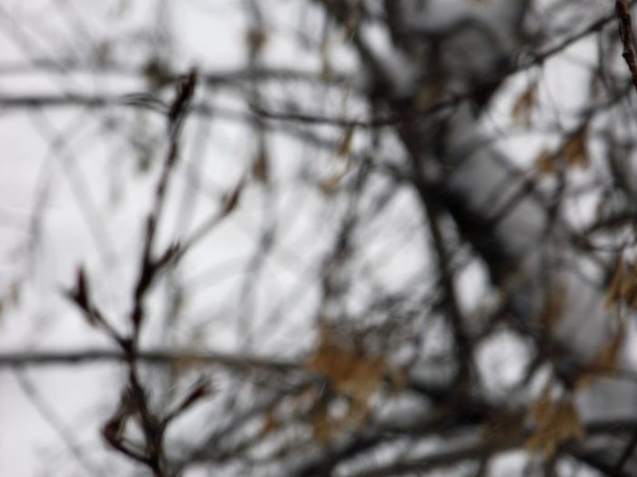 вид из окна, фото новосибирска, фото из окна, зимние фото, зимние пейзажи, городской пейзаж/4203019_DSCF0492 (700x525, 189Kb)