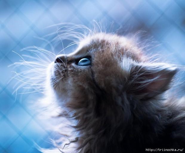 Однажды я встретил бездомную кошку: