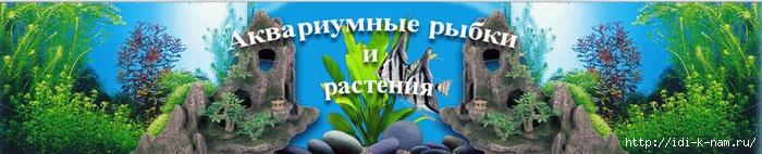 как ухаживать за аквариумными живородящими рыбками, какие бывают живородящие аквариумные рыбки,/1393296516_Bezuymyannuyy (700x142, 133Kb)