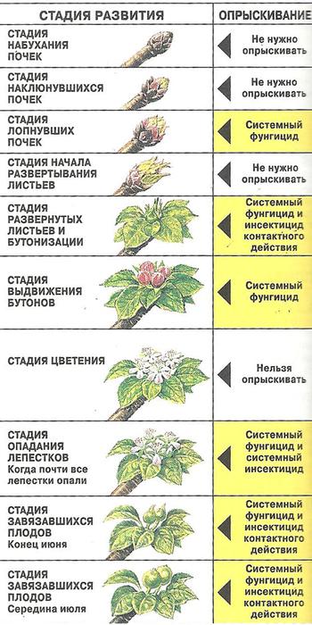 Калина уход и выращивание защита от вредителей 55