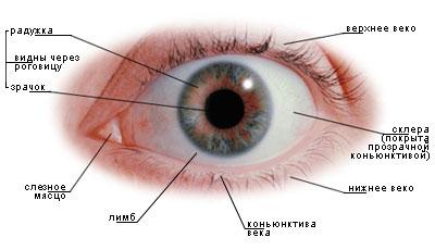 eyes1 (400x230, 19Kb)