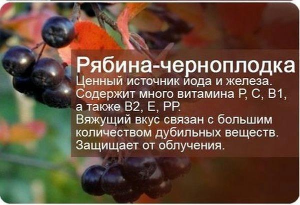 3657e5b61051ecbdb1443fcc9d9d1b71 (600x411, 111Kb)