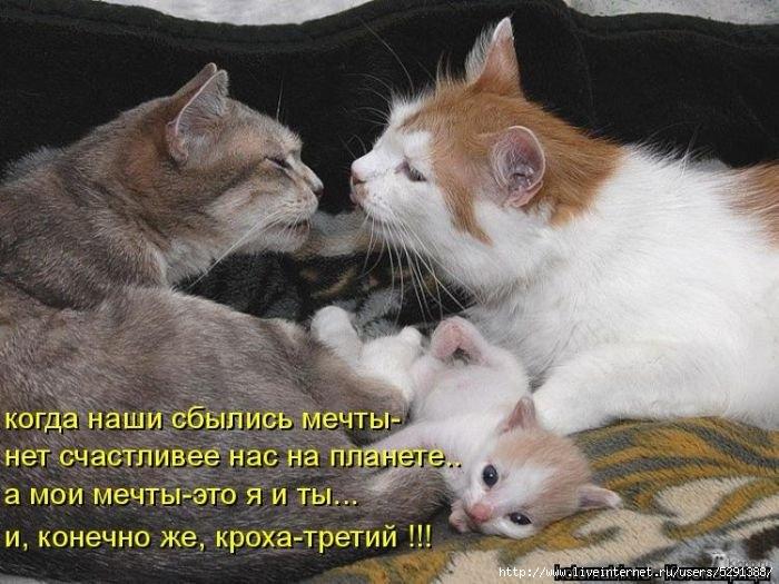 1301613243_kotomatrix_05-1 (700x525, 207Kb)