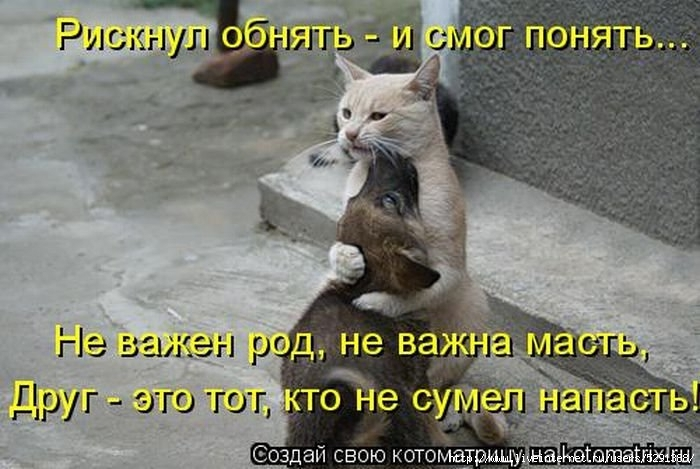 1301613319_kotomatrix_14-1 (700x469, 186Kb)