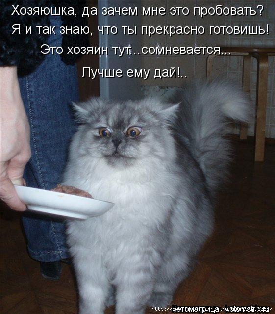 kotomatritsa_hc (561x640, 189Kb)