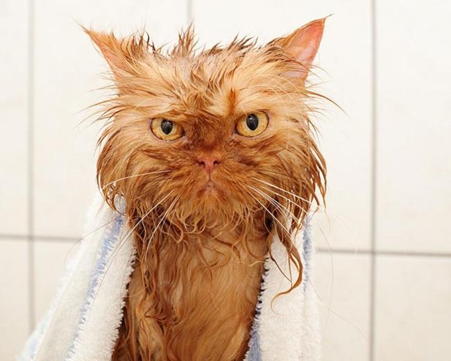 3496955-R3L8T8D-650-funny-wet-cats-4 (650x520, 253Kb)