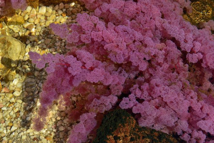 река пяти цветов колумбия фото 6 (700x467, 497Kb)