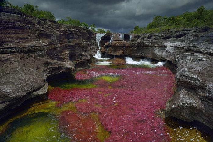 река пяти цветов колумбия фото 10 (700x467, 409Kb)