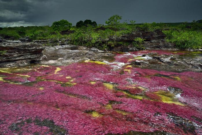 река пяти цветов колумбия фото (700x467, 448Kb)