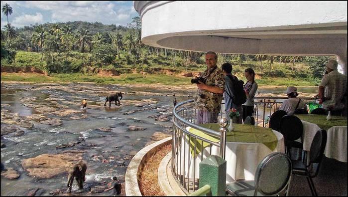Слоновий питомник на Шри-Ланке/3673959_1 (700x395, 62Kb)