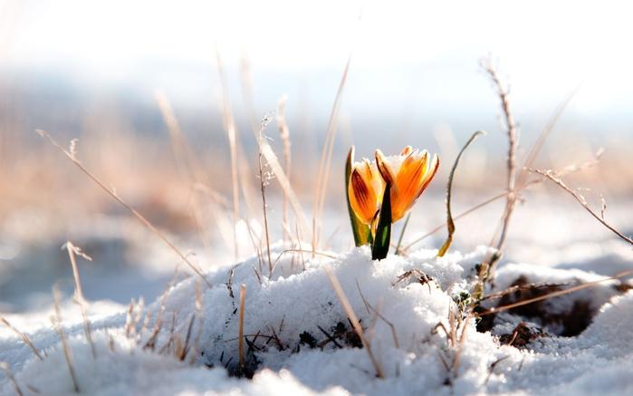весна 1 (700x437, 101Kb)