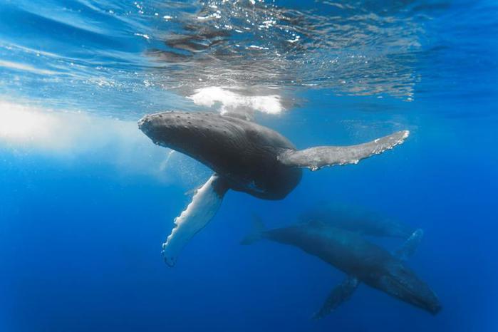 Ученые: почему киты выбрасываются на берег