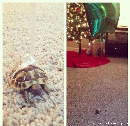 черепаха (492x479, 136Kb)