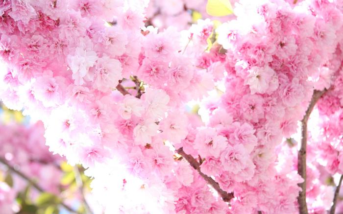 весна,обои 14 (700x437, 383Kb)