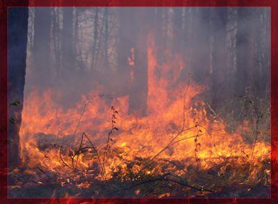 Польша отправила батальон пожарных для тушения пожаров вПодмосковье