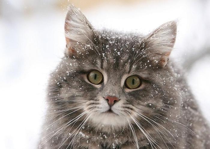 кошка/4574032_001 (700x498, 54Kb)