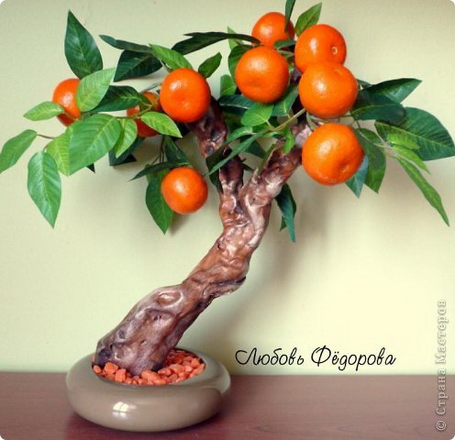 Фото мандаринового дерева своими руками