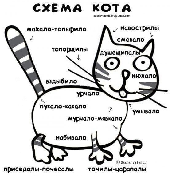 Схема кота (560x570, 61Kb)